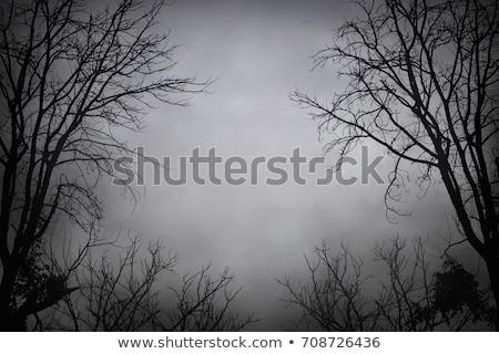 halloween creepy tree background stock photo © lightsource
