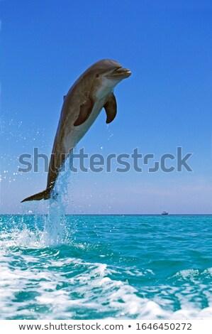 yunuslar · oynama · su · mavi · atlamak · eğlence - stok fotoğraf © zurijeta