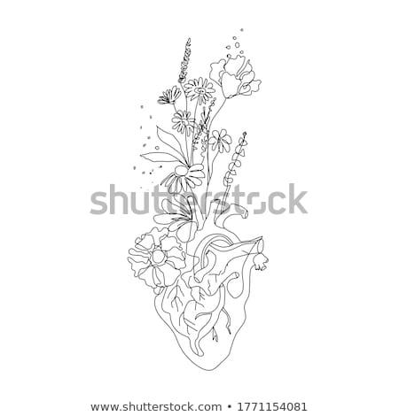flower heart eps 10 stock photo © beholdereye