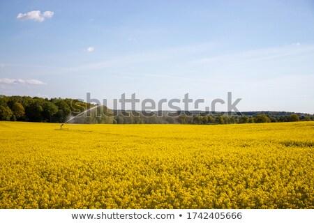 termény · Kanada · piros · csőr · Saskatchewan · felhők - stock fotó © pictureguy