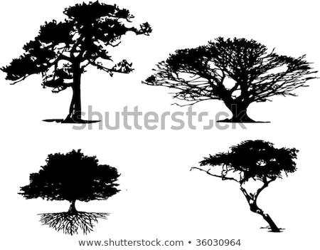 Сток-фото: четыре · различный · деревья · иллюстрация · лист · фон
