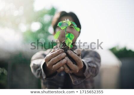 ludzka · ręka · zielone · liści · wzrostu - zdjęcia stock © ia_64
