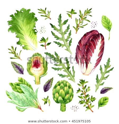 Watercolor illustration of radicchio salad Stock photo © Sonya_illustrations