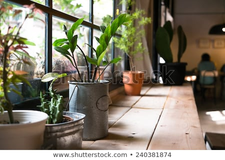 Restaurant weinig plant tabel outdoor Stockfoto © Artlover