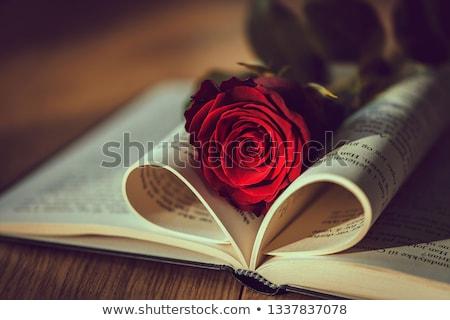 Kırmızı gül kitap çiçek kâğıt sevmek gül Stok fotoğraf © inaquim