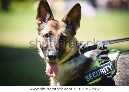 Polizia cane canina formazione animale illustrazione Foto d'archivio © lenm