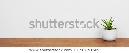 Roślin soczysty szary ceramiczne puli Zdjęcia stock © Melnyk