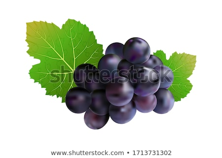 Stock photo: Red Grapes Poster with Bunch Purple Grape Vector