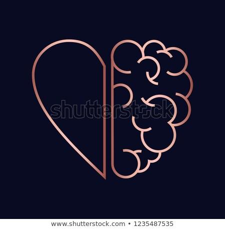 Cobre coração cérebro ilustração trabalhar equipe Foto stock © cienpies