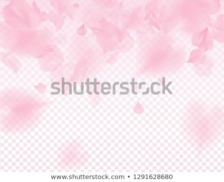 Pink sakura petals transparent background. A lot of falling petals 3D romantic valentines day Stock photo © Iaroslava