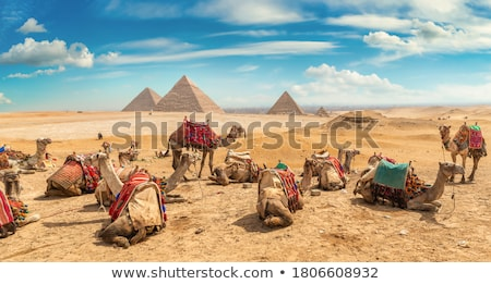 ラクダ · 砂漠 · 2 · ラクダ · 見える · 太陽 - ストックフォト © givaga
