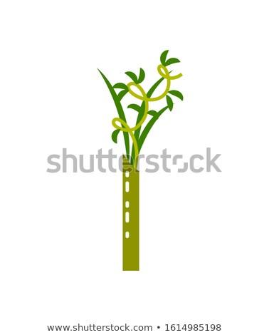 Bambusz trópusi istálló levelek ázsiai növény Stock fotó © robuart