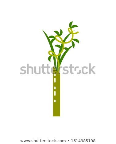 vert · bambou · vecteur · fond · été · usine - photo stock © robuart