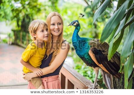 Famille heureuse maman fils regarder paon parc Photo stock © galitskaya