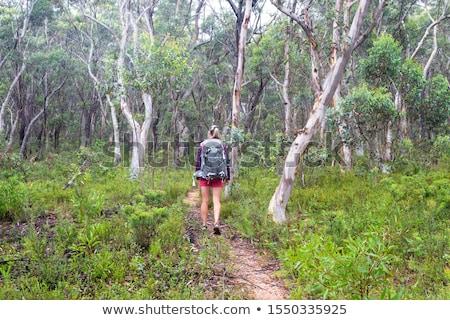 женщину походов лес камедь деревья тропе Сток-фото © lovleah
