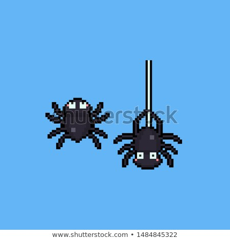 Aranha ícone animal isolado natureza Foto stock © Imaagio