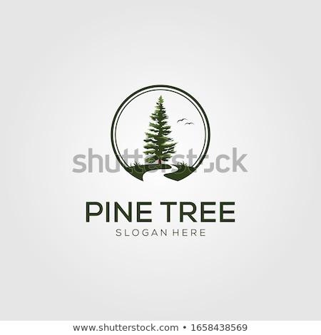 Cedro albero logo modello vettore icona Foto d'archivio © Ggs