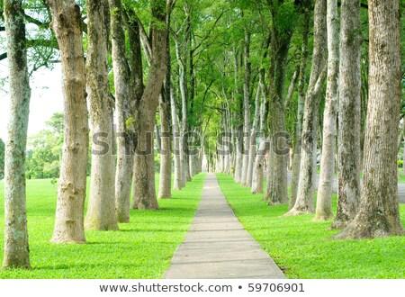 zöld · tavasz · fák · sikátor · gyönyörű · aszfalt - stock fotó © ansonstock