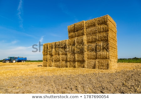 stro · baal · zonsondergang · oogst · hond · land - stockfoto © digoarpi