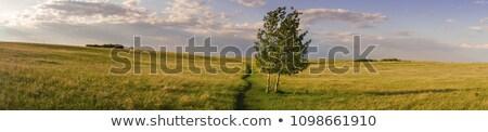 劇的な 草原 風景 25 メガピクセル 空 ストックフォト © SimpleFoto