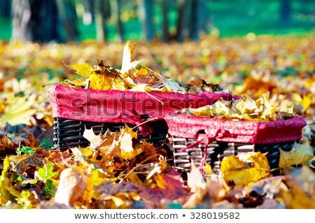 Pile og vibrant fall leaves Stock photo © klikk