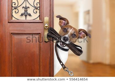 Foto stock: Mestre · jogar · cão · labrador · gramado · feliz