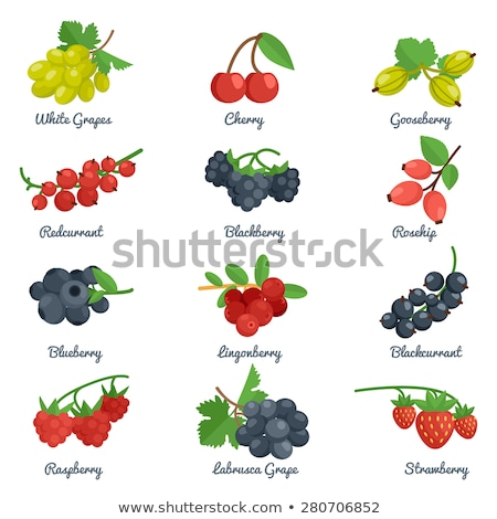 isolated blackcurrant and redcurrant stock photo © m-studio