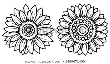 定型化された 図面 ヒマワリ 中世 布 イースター ストックフォト © inaquim
