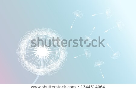 Photo stock: Pissenlit · vent · semences · suspendu · nature · lumière
