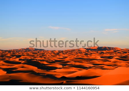 Camellos sáhara naturaleza paisaje arena Foto stock © danielgilbey