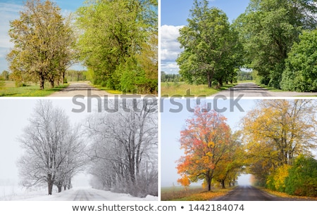 Beautiful collage of rural roads Stock photo © Julietphotography