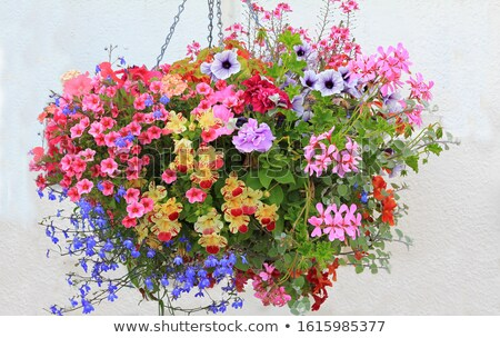 dohány · rózsaszín · virágok · nyár · idő · virág - stock fotó © ivonnewierink