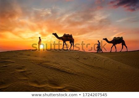 Foto stock: Camelo · ilustração · natureza · areia · silhueta · africano