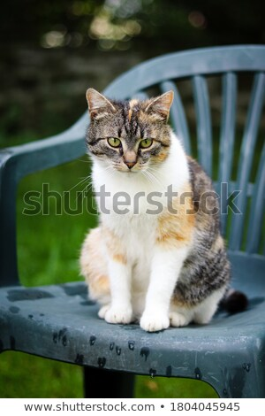 An innocent cat Stock photo © kawing921