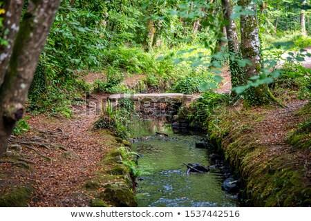 Puente peatonal corriente simple pequeño Foto stock © rhamm