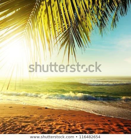 palmbladeren · idyllisch · strand · boom · zanderig - stockfoto © ellensmile