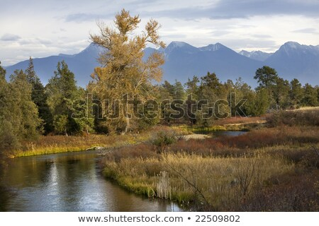 Fall Colors River Reflections Snow Mountains National Bison Rang Stock photo © billperry