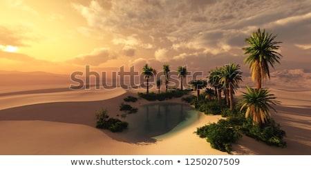 Oázis gyönyörű természetes afrikai égbolt fa Stock fotó © andromeda