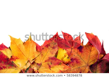 Vivid autumnal leaves frame for your text. Stock photo © beholdereye