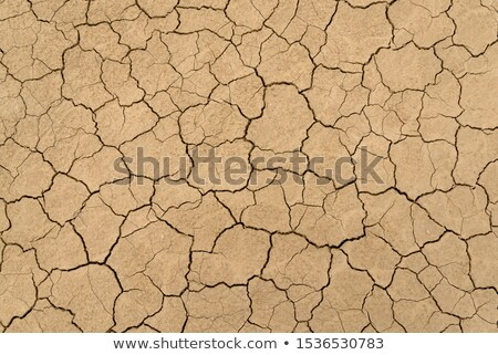 Parched ground Stock photo © w20er