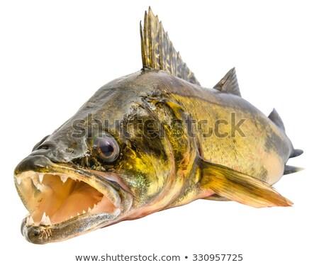 Balık açmak ağız yalıtılmış beyaz Stok fotoğraf © Ralko