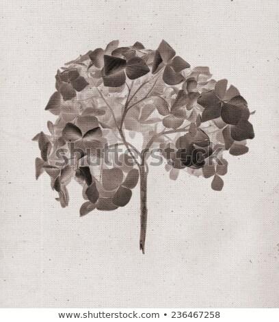 Negative fiore foto isolato nero Foto d'archivio © cherezoff