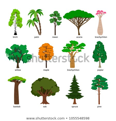 Forest of acacia trees Stock photo © wxin