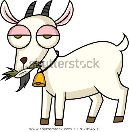 goats eating grass on farm stock photo © mikko