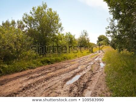 Estrada de terra verde mata primavera Foto stock © AlisLuch