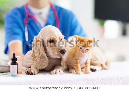 Zdjęcia stock: Happy Vet Examining A Cute Dog