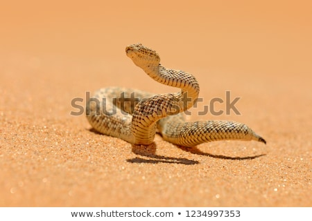 A desert with a reptile Stock photo © bluering