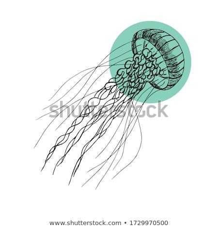 meduza · illusztráció · víz · esküvő · szeretet · pár - stock fotó © adrenalina