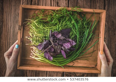 Village herbs dill, basil, onions in a wooden box Stock photo © Karpenkovdenis