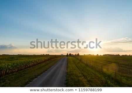vidéki · út · nyár · reggel · vezető · erdő · sugarak - stock fotó © fogen